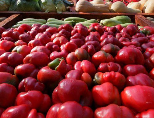 Seed Money Projecten in de agrifoodsector